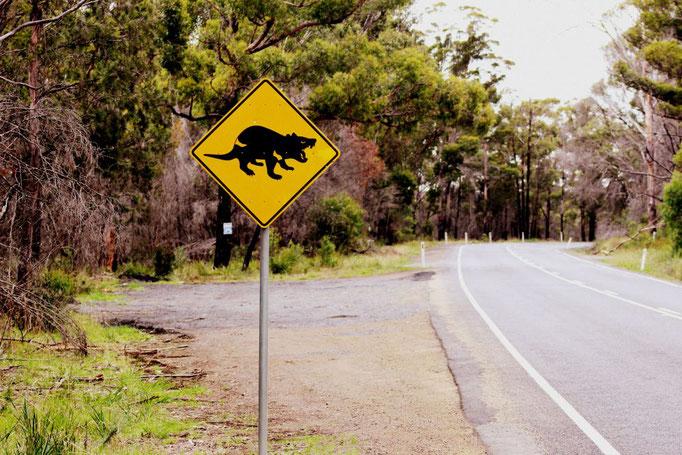 Warnung vor dem Tasmanischen Teufel
