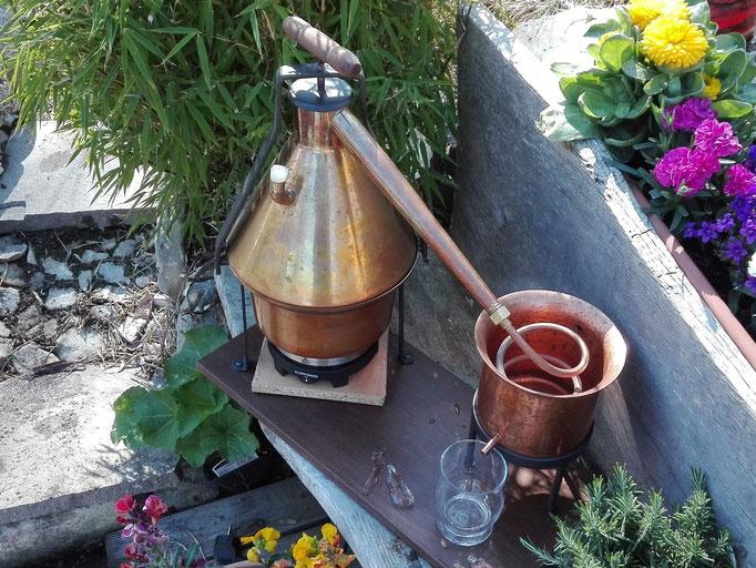 Pflanzenwasser selbst destillieren
