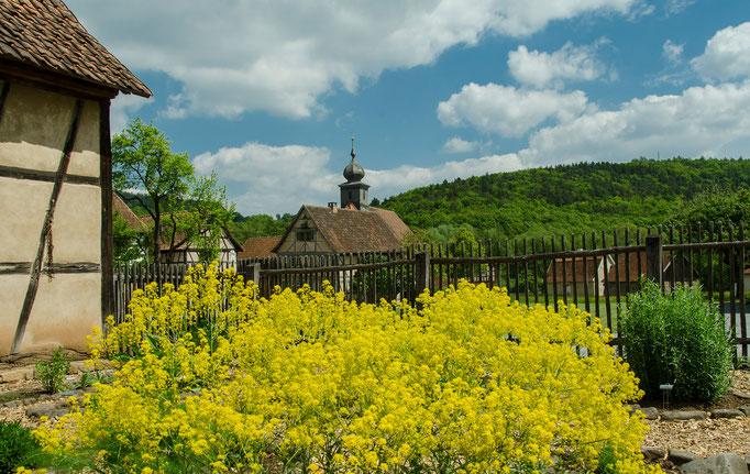 Kräutergarten, Färberwaid