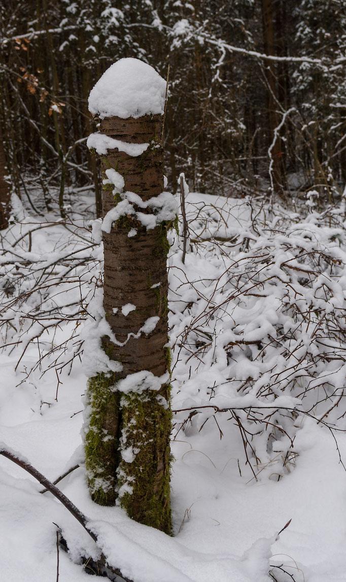 Stammfragment mit Schneehaube