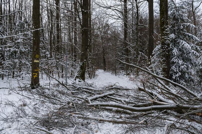 kein Durchkommen oder die Rückstände der Baumfällaktion