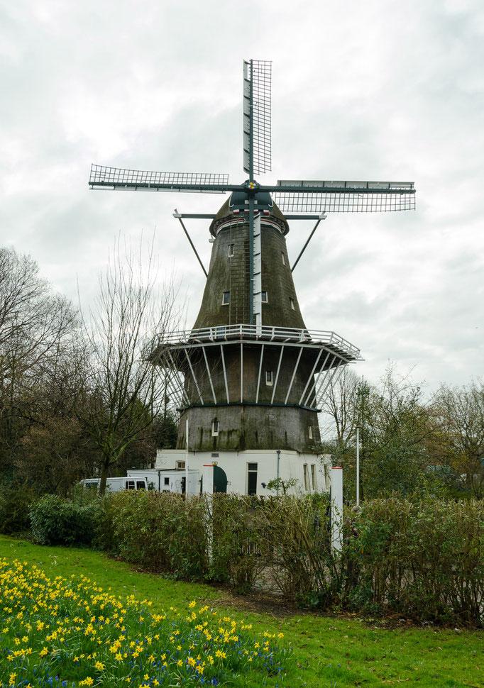 Windmühle an der Stadtausfahrt von Amsterdam