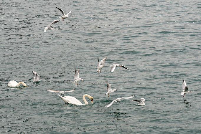 Wasservögel in Aktion