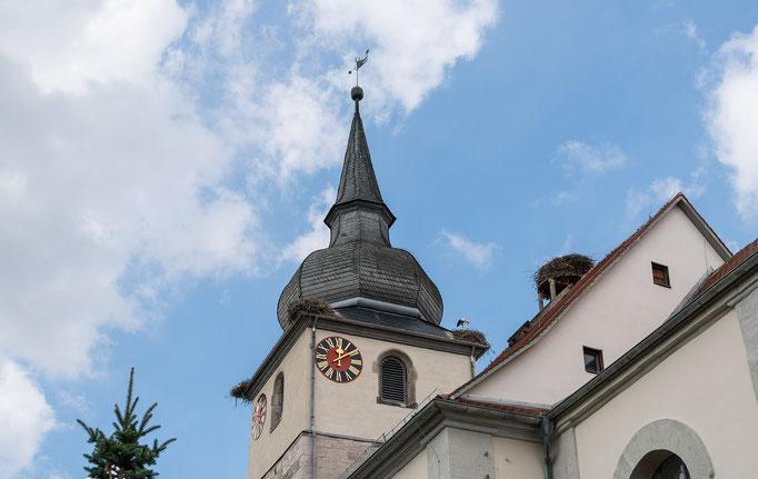Störche und Storchennester in Ipsheim