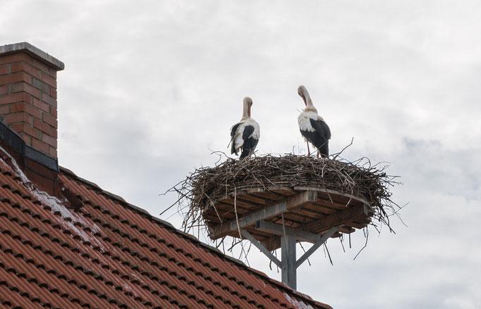 Störche und Storchennester in Gerhardshofen