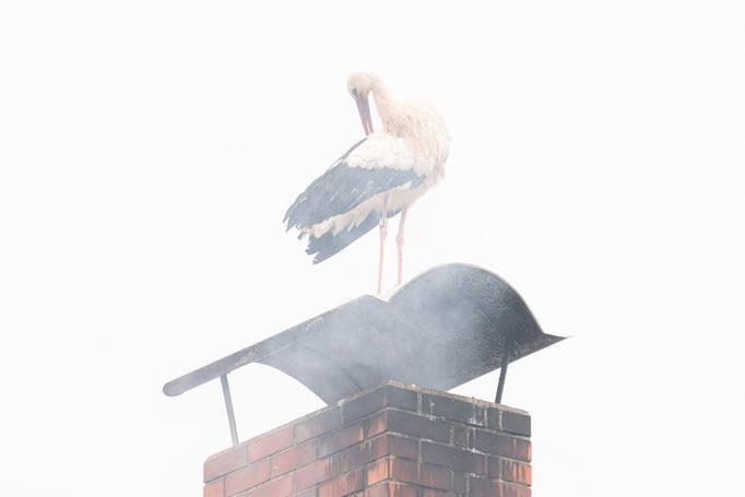 Will sich der Vogel räuchern lassen?