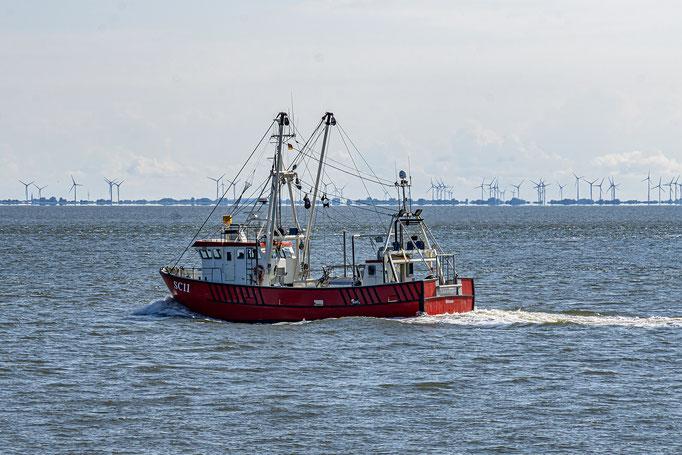 Das Krabbenfangschiff SC11, im Hintergrund ist das Schleswig-Holsteinsche Elbeufer