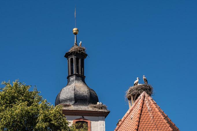 Störche in Gerhardshofen, Kirche