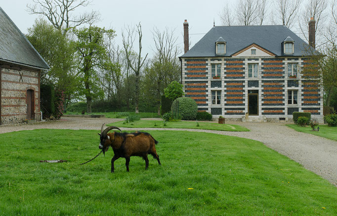 Wohnhaus mit dem Ziegenbock im Vordergrund (Besuch einer Ziegenfarm)