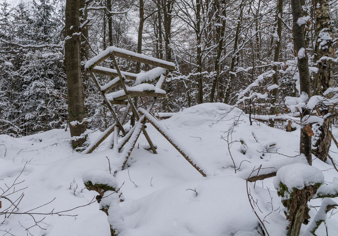 Im Winterwald bei Ebrach