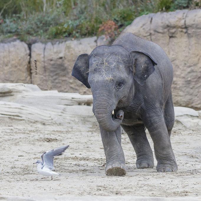 Chasing a bird
