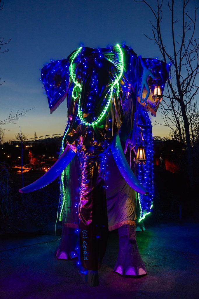 A light elephant