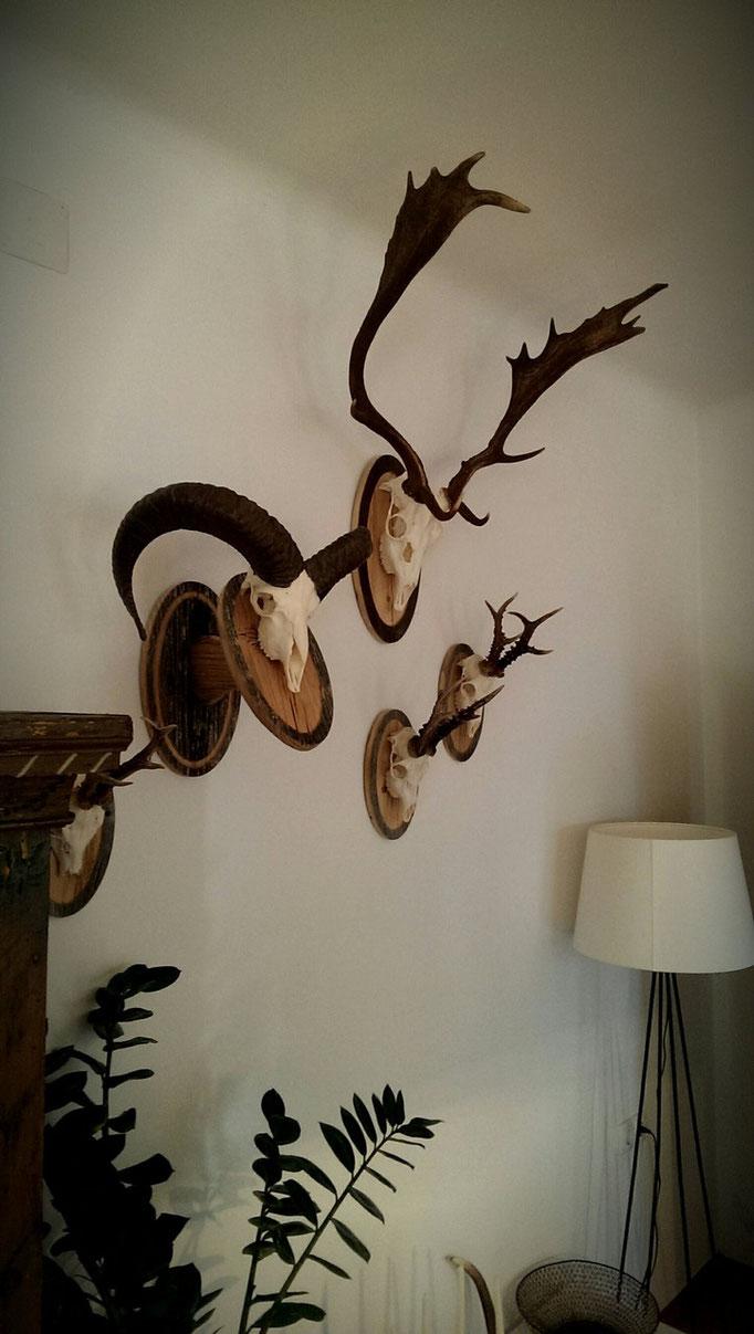 Trophäenwand der Familie Wolf auf  sonnengebrannten Altholzschildern