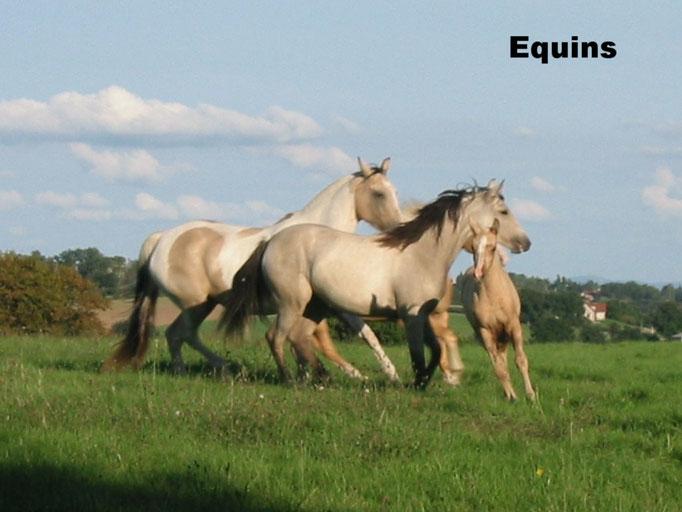 Equins
