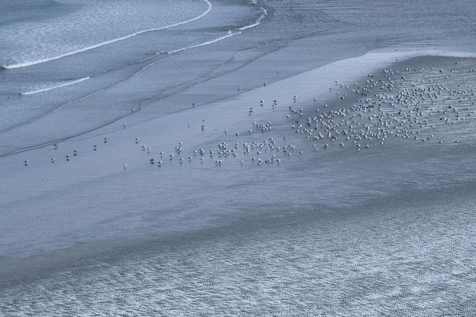 Gulls, Norway