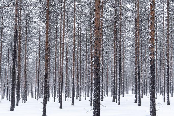 Forest, Sweden
