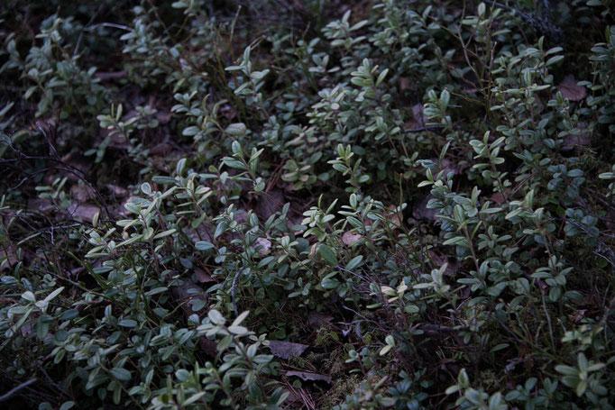 Plants, Sweden