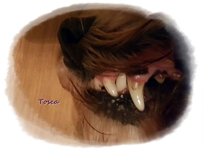 Das ist das Ausgangsbild von Toscas Zahn