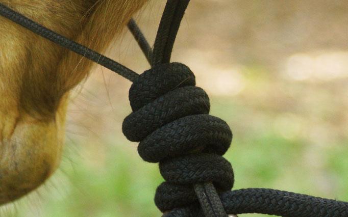 Horsemanship, Problempferde, Beritt, Freies Arbeiten