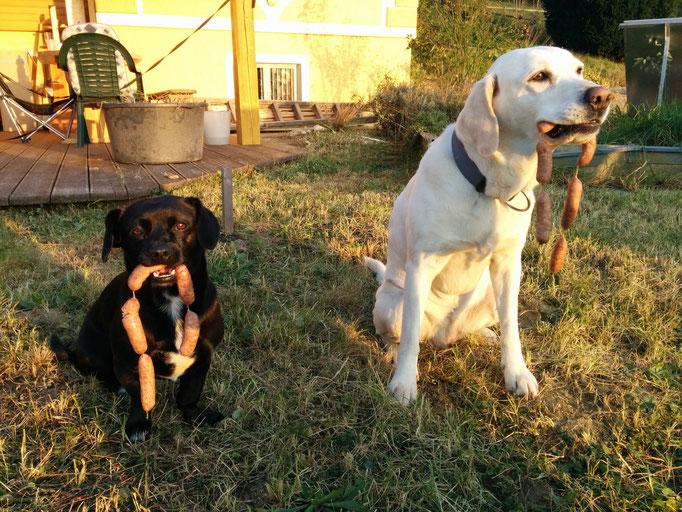 Klickertraining, Hundetraining, Hundeerziehung