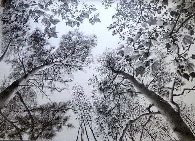 Baumkronen | 2019 | Bleistift auf Karton | 70 x 100 cm