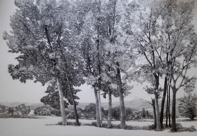 Ardèche, Baumgruppe, 2019, Bleistift auf Karton, 70 x 100 cm