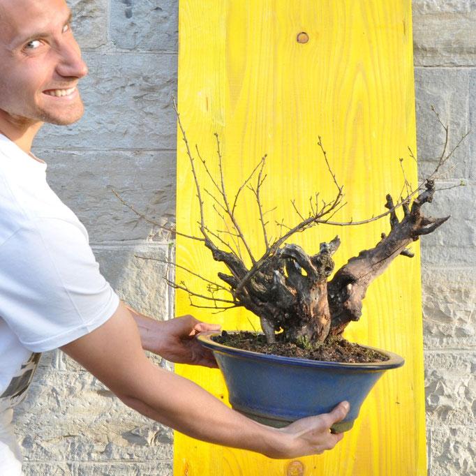 Demo di Mauro Brocchieri - Prunus mume