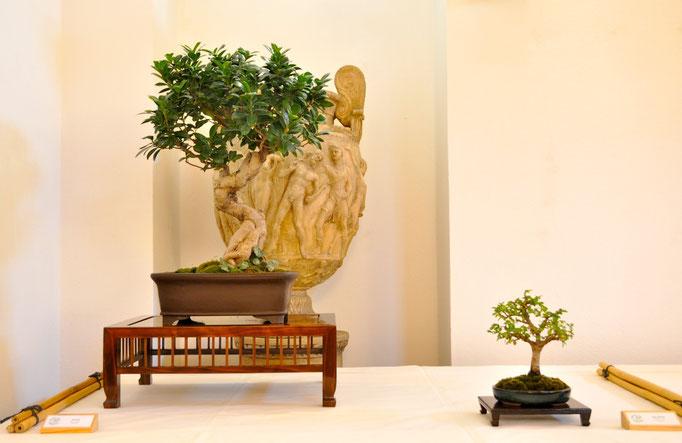 Ficus di Tiziano Tessaro e zelkova nire di Andrea Oldrini