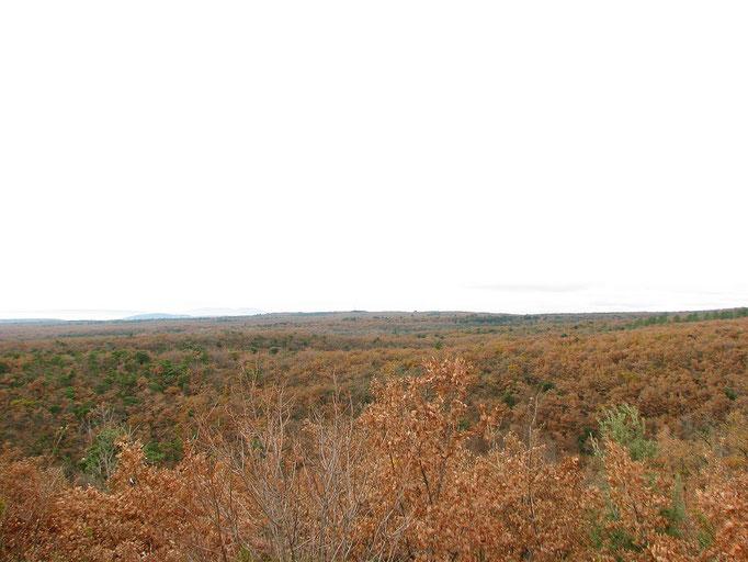 Entre Taulignan et Aleyrac : foret de chénes