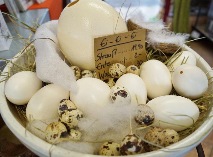 Eier - Groß und Klein