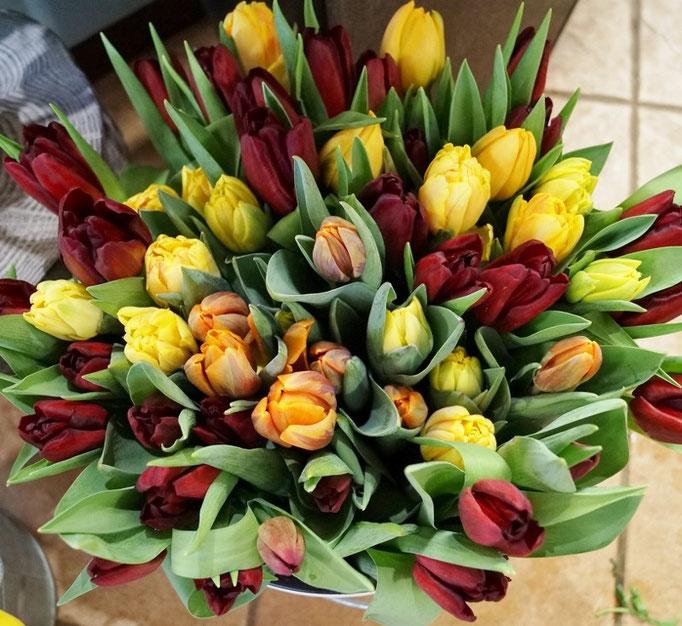 Tulpen aus Eibenbau