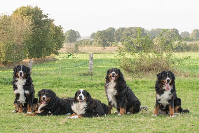 Junior, Jano, Deele, Henja und Jogi vom Rönnbaum, September 2016