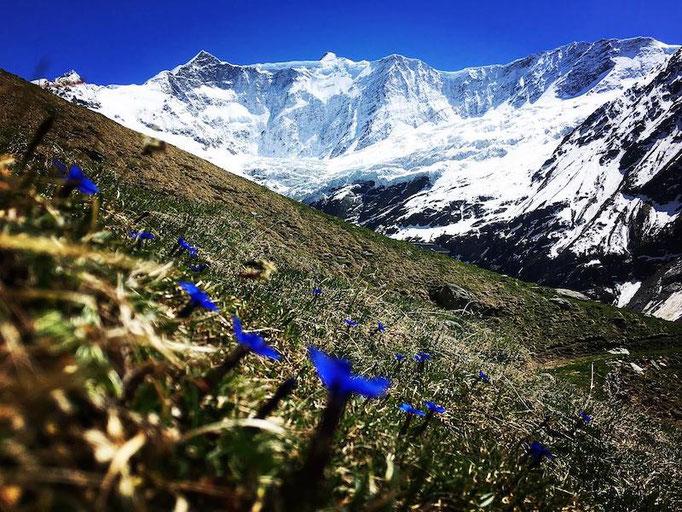 Alpenblumen Bäregg