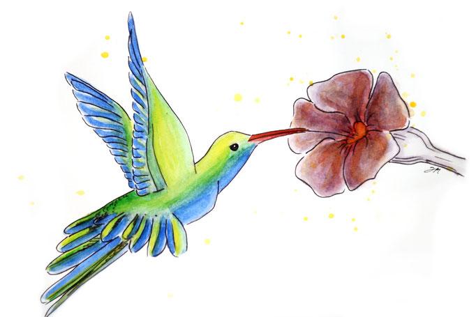 Colibri 2015