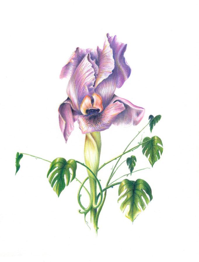 Iris and Monstera