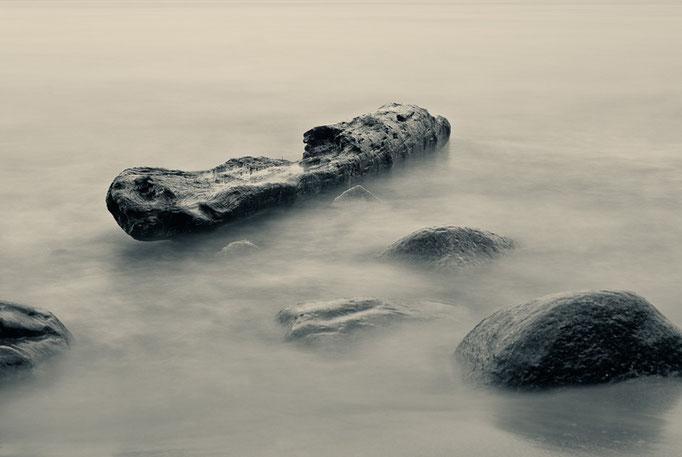 Treibholz am Strand von Binz