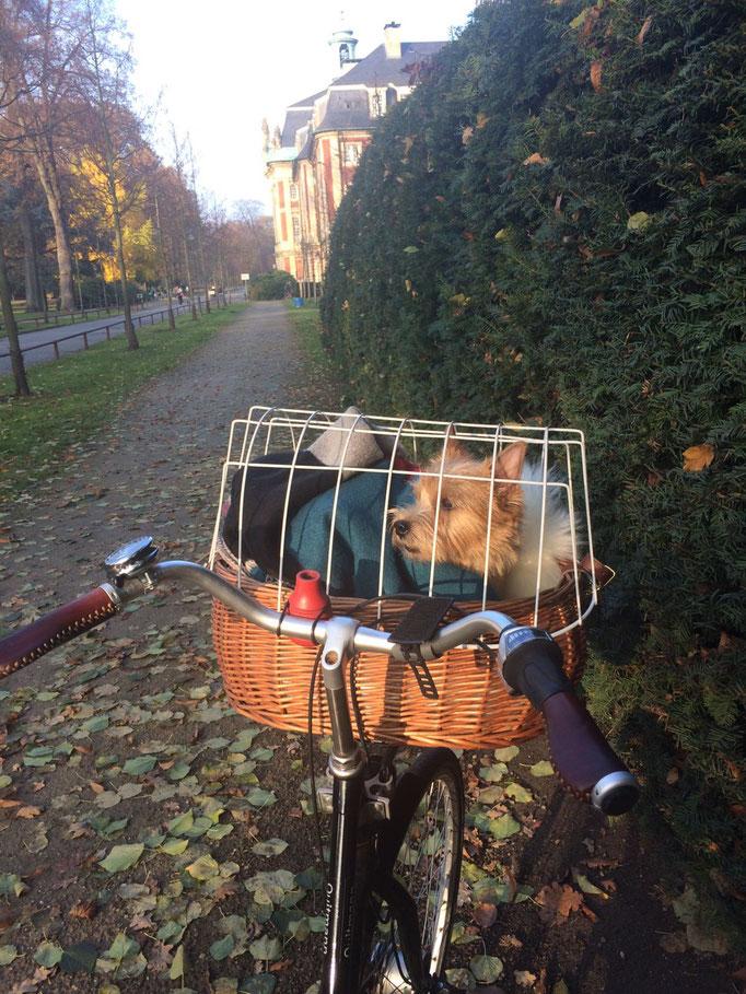 Quinsy im Fahrradkorb