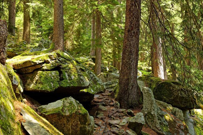 Nadelwälder