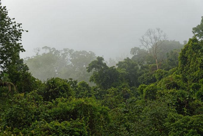 Nebel im NP Los Quetzales