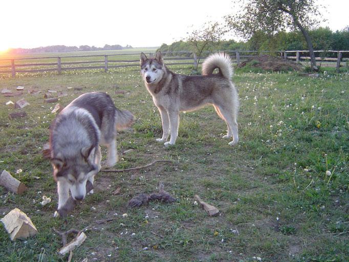 Aslan und Kanee