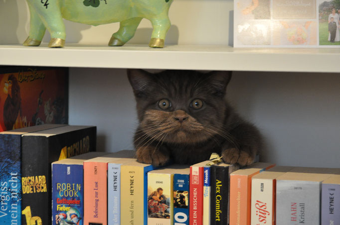 schlaue Katze Kater