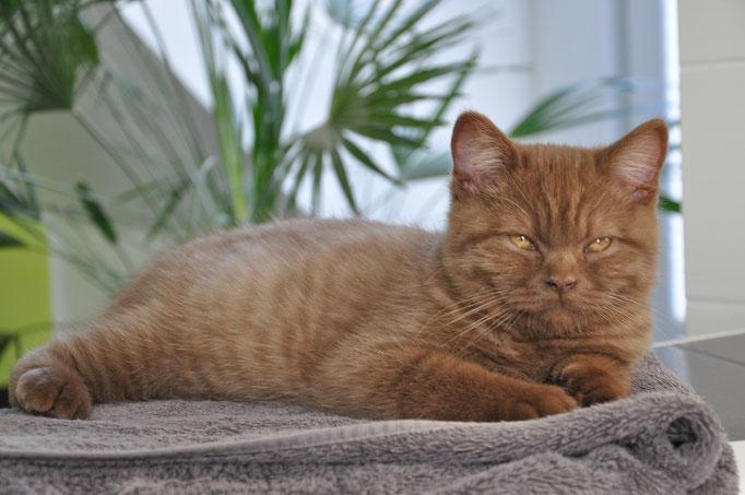 Katzen Entspannung