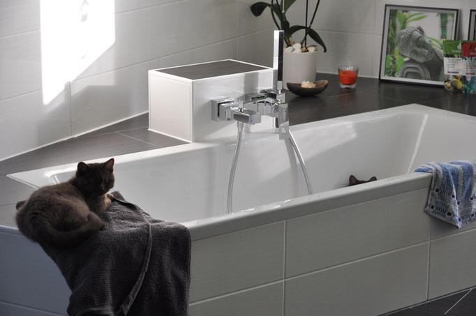 Alles im Haus ist spannend für eine neue Katze