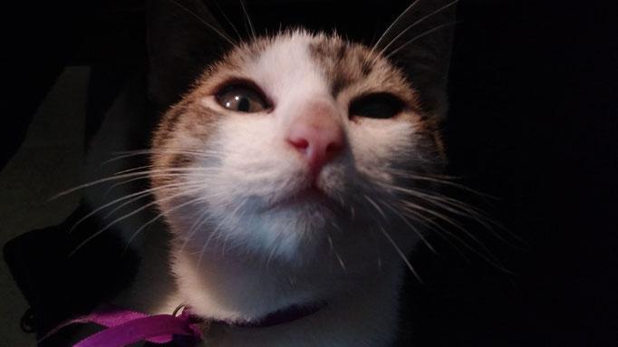 la mascota más chiquita se llama Modo / das jüngste Haustier heisst Modo