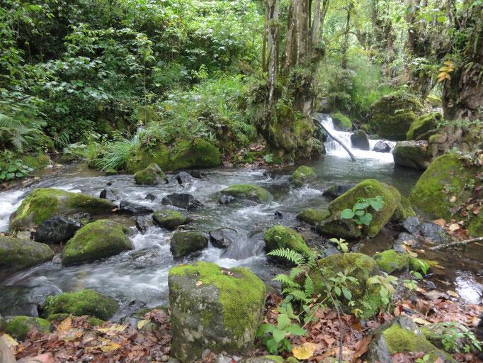 biótopo protegido del Río San Lorenzo / geschütztes Biotop des San Lorenzo-Flusses