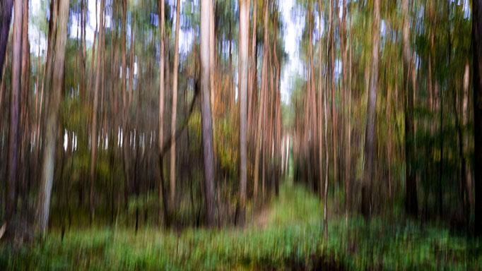 Uwe Eckardt - Impressionistischer Wald