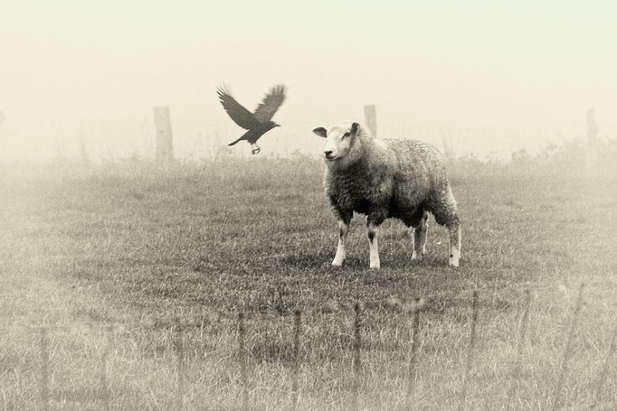 """Peter Haar, """"das Schaf und das Biest"""""""