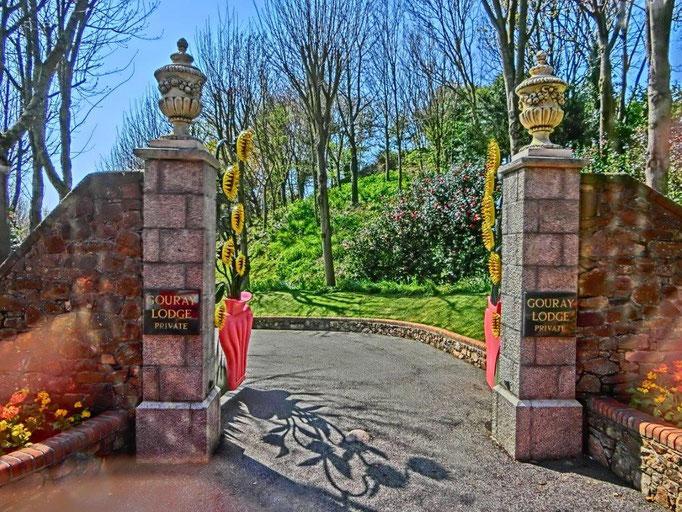 Fiddi Gevers - Sonnenblumenvilla Jersey