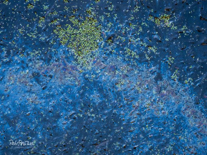 Kleine Wasserlinsen auf gefrorenem Wasser, Soonwald, D