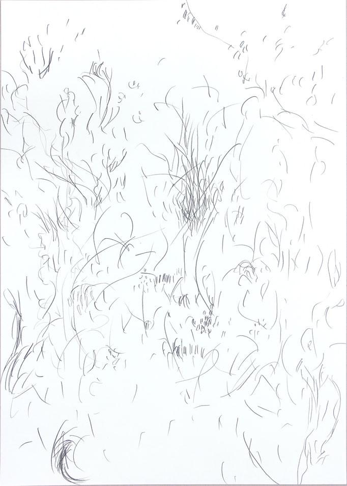 Aus der Werkreihe: Lebendiges | Bleistift auf Papier, 50 x 70 cm